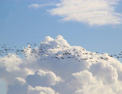 bird-migration-