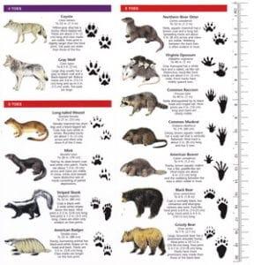 Pocket Naturalist Guide-Animal Tracks