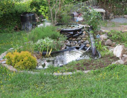 backyard pond for wildlife