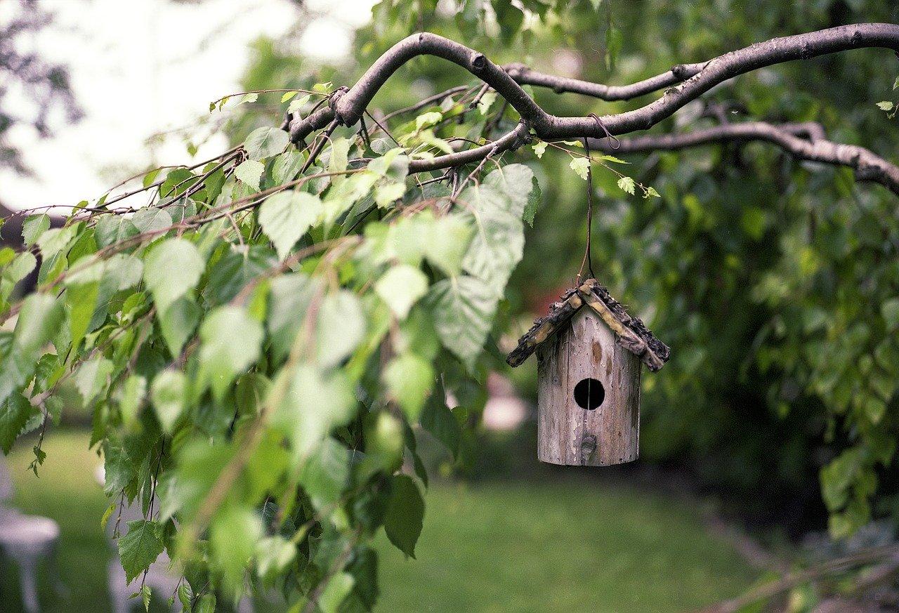 bird-feeder-2344414_1280