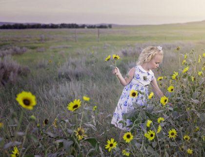 child in sunflower field