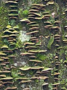 tree lichens