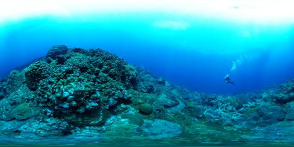 p_fgb-e_diver-near-mound_thumbnail