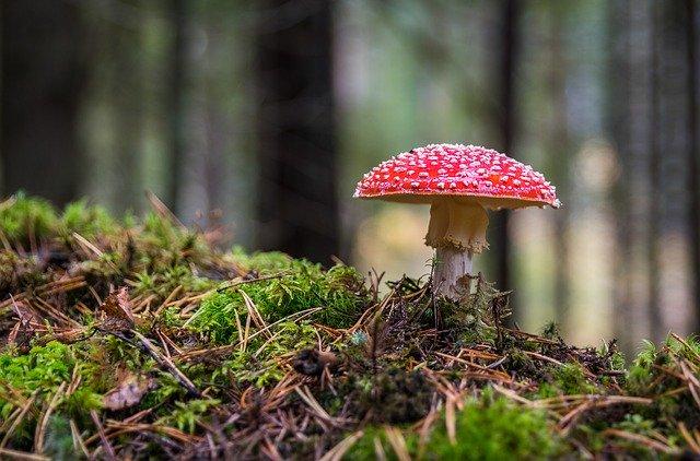 mushroom-3051519_640