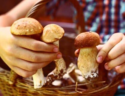 child holding mushrooms