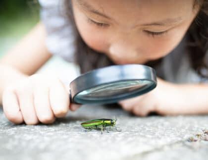 Child studying nature