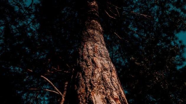 tree identification
