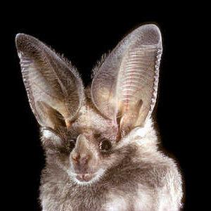Bat-Week
