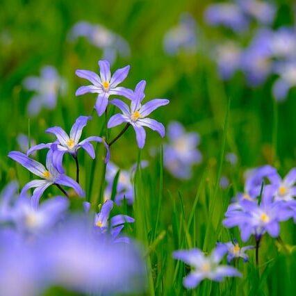 starflower-4812366_640